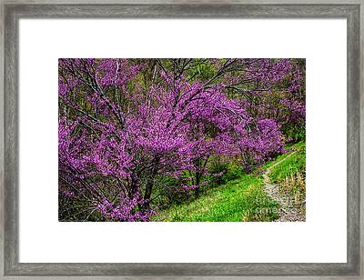 Framed Print featuring the photograph Redbud And Path by Thomas R Fletcher