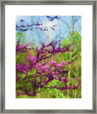 Redbud Tree Framed Print by James Barber