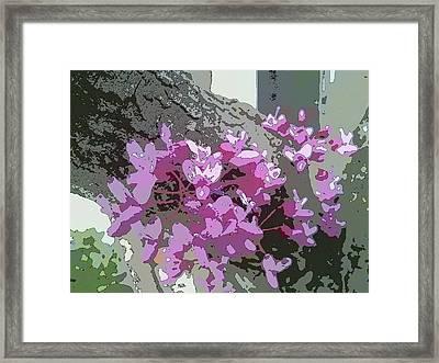 Redbud Tree Framed Print
