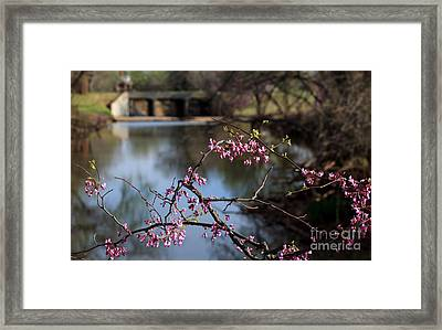 Redbuds And An Old Bridge Framed Print
