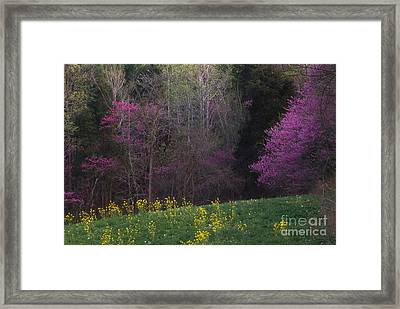 Redbuds And Green Fields Framed Print by Lowell Anderson