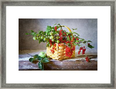 Redcurrants And Gooseberries Framed Print by Nikolay Panov