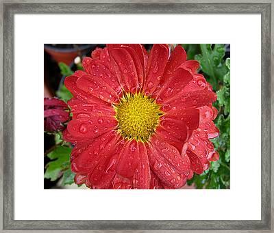 Reddish Framed Print by Vari Buendia