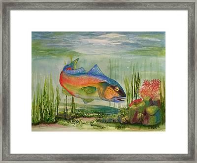 Rainbow Fish Framed Print