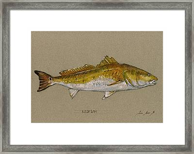 Redfish Painting  Framed Print by Juan  Bosco