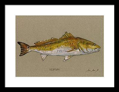 Fishing Framed Prints