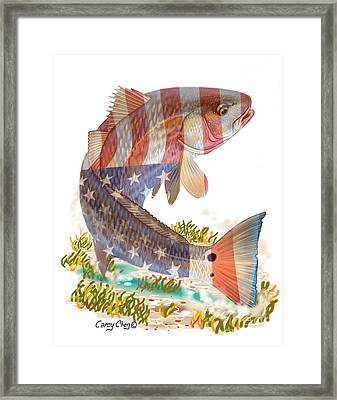 Redfish, White And Blue Framed Print by Carey Chen
