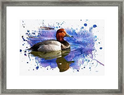 Redhead Drake Framed Print