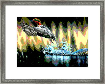 Redhead Duck Framed Print by Charles Shoup