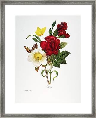 Redoute: Hellebore, 1833 Framed Print by Granger