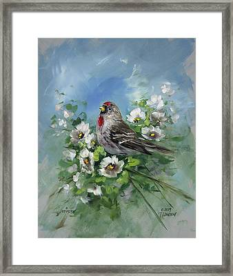 Redpole And Blossoms Framed Print by David Jansen