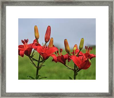 Framed Print featuring the photograph Reds by Robert Pilkington