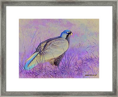 Redtail Hawk Framed Print by Mark Mittlesteadt