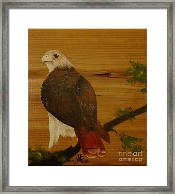 Redtail Framed Print by Jena Gillam
