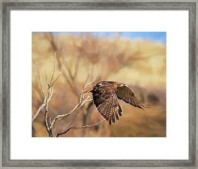 Redtail On The Move Framed Print by Donna Kennedy
