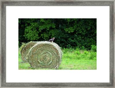 Redtailed Hawk Framed Print by Jan Amiss Photography