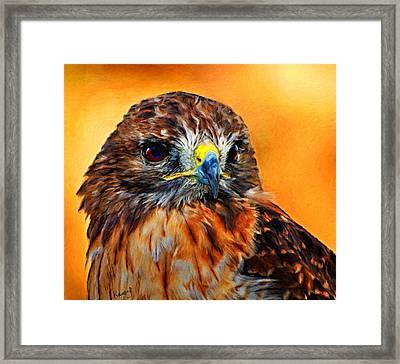 Redtailed Hawk Framed Print