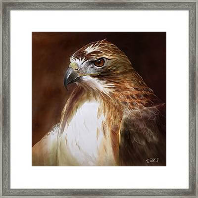 Redtailed Hawk Portrait Framed Print