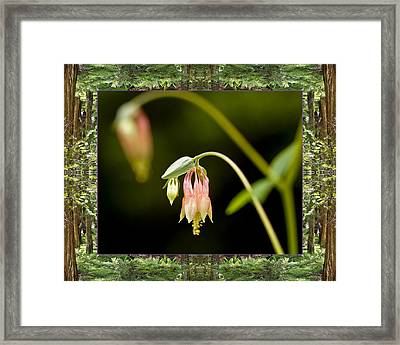 Framed Print featuring the photograph Redwood Columbine by Bell And Todd