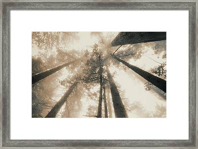 Redwood Forest, Northern California, Usa Framed Print by Mel Curtis