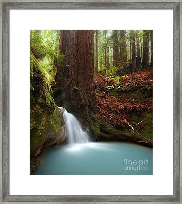 Redwood Forest Waterfall Framed Print