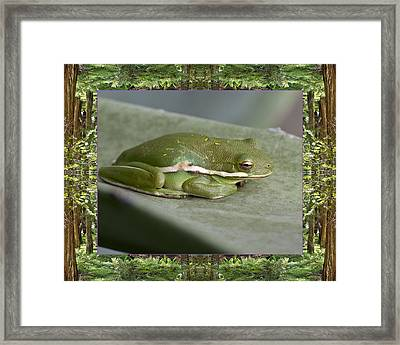 Framed Print featuring the photograph Redwood Frog by Bell And Todd
