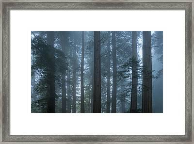 Redwood Mist Framed Print by Steve Gadomski