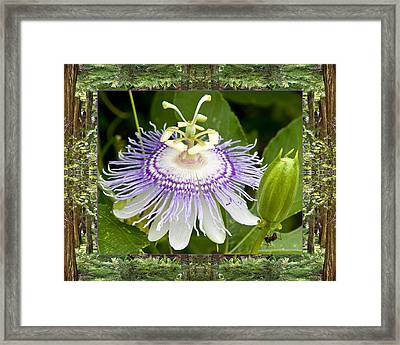 Redwood Passion Framed Print by Bell And Todd