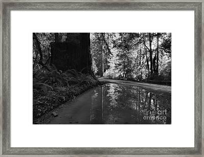 Redwood Reflections Black And White Landscape Framed Print