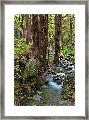 Redwood Stream Framed Print by Arthurpete Ellison