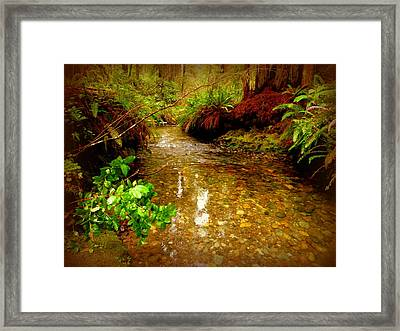 Redwood Stream Reflections Framed Print by Cindy Wright
