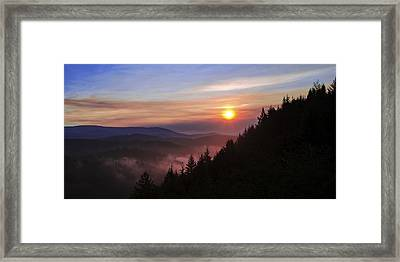 Redwood Sun Framed Print by Chad Dutson