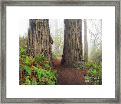 Redwood Trail Framed Print