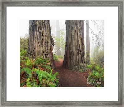 Redwood Trail Framed Print