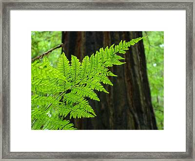 Redwood Tree Forest Ferns Art Prints Giclee Baslee Troutman Framed Print by Baslee Troutman