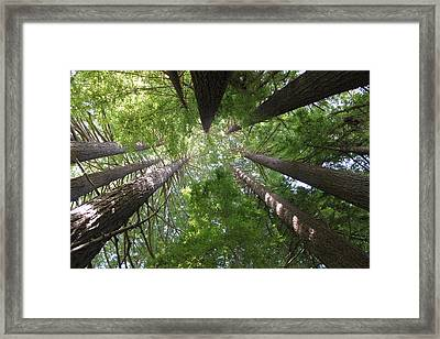 Redwood Tree Scope Framed Print