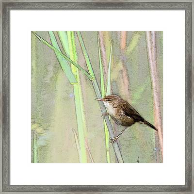 Reed Warbler Framed Print by Art By Jeronimo