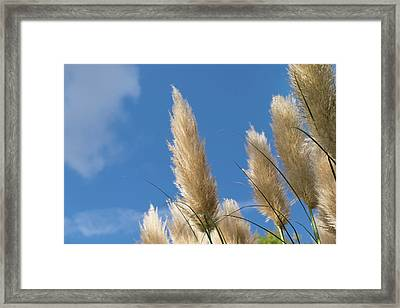 Reeds Against Sky Framed Print