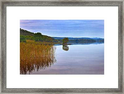 Reeds And An Islet In Lough Macnean Framed Print by Panoramic Images