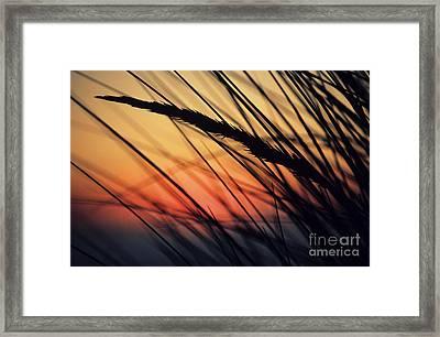 Reeds And Sunset Framed Print by Brent Black - Printscapes