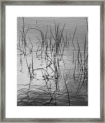 Framed Print featuring the photograph Reeds by Art Shimamura