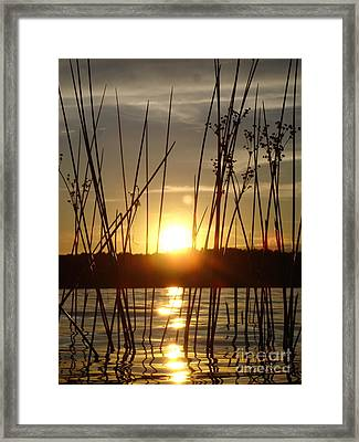 Reeds In A Lake Framed Print by Chad Natti