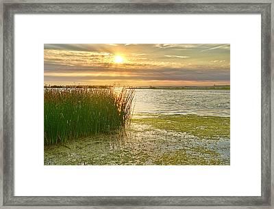 Reeds In The Sunset Framed Print