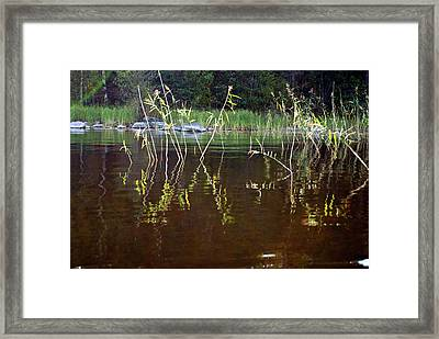 Reeds In Water Framed Print