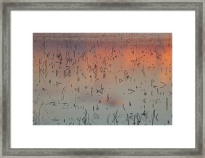 Reeds Framed Print by Mark Alder