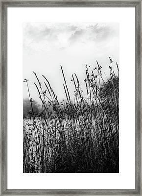 Reeds Of Black Framed Print