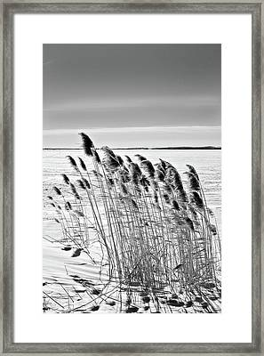 Reeds On A Frozen Lake Framed Print