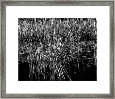 Reeds Reflection  Framed Print