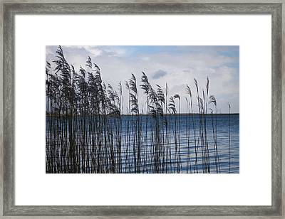 Framed Print featuring the photograph Reeds by Votus
