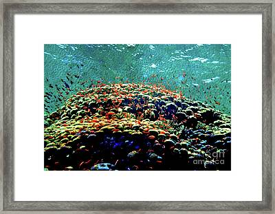 Reef Daze Framed Print